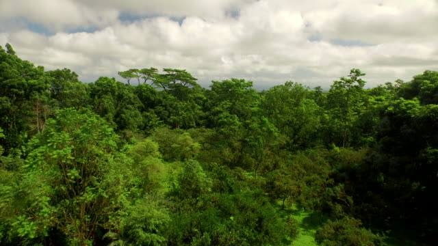 forest of the galapagos - ecuador stock videos & royalty-free footage