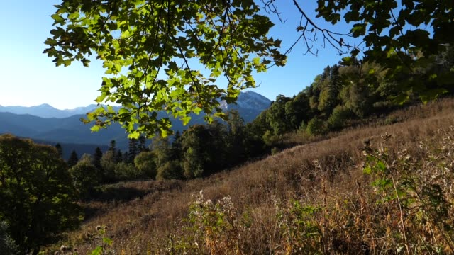 Forest of Western Caucasus