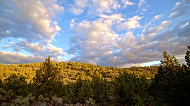 forest of western juniper trees at sunset south steens mountain near malheur national wildlife refuge - oregon us state stock videos & royalty-free footage