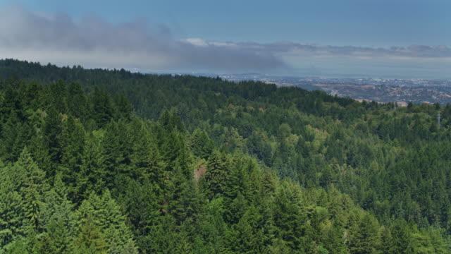 vídeos de stock e filmes b-roll de forest on the san francisco peninsula with redwood city in distance - san francisco california
