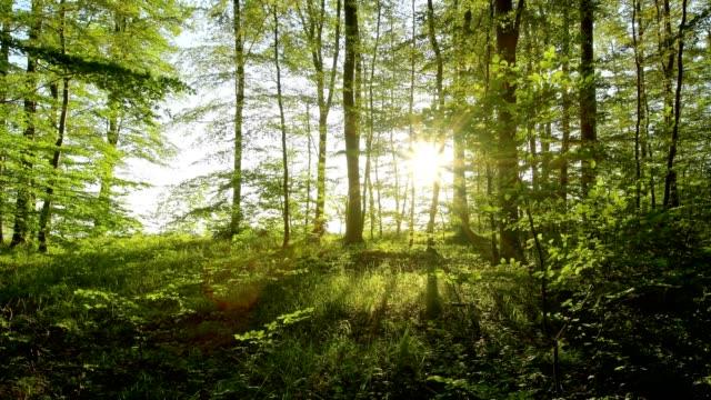 Forest on the steep coast at sunrise, Langenberg, Bansin, Usedom, Baltic Sea, Western Pomerania, Germany