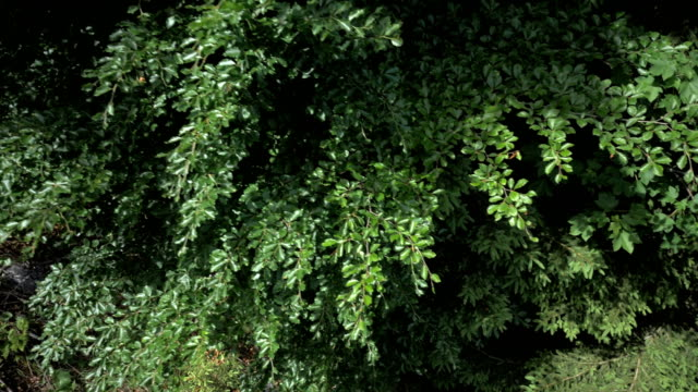Forest pan downwards
