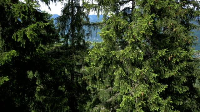forest pan horizontal - アッパーオーストリア点の映像素材/bロール