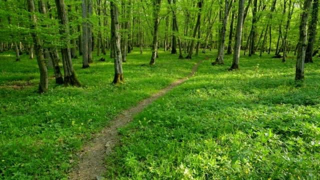 vídeos de stock, filmes e b-roll de forest path in spring, sodenberg, hammelburg, district bad kissingen, rhön, bavaria, germany - faia árvore de folha caduca