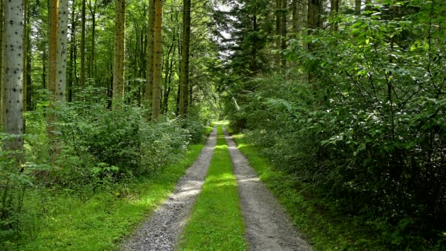 stockvideo's en b-roll-footage met forest path in summer, vandet so, thisted, nationalpark thy, north jutland, denmark - footpath