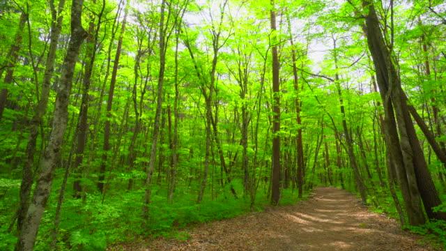 緑の森の道 - 散歩道点の映像素材/bロール