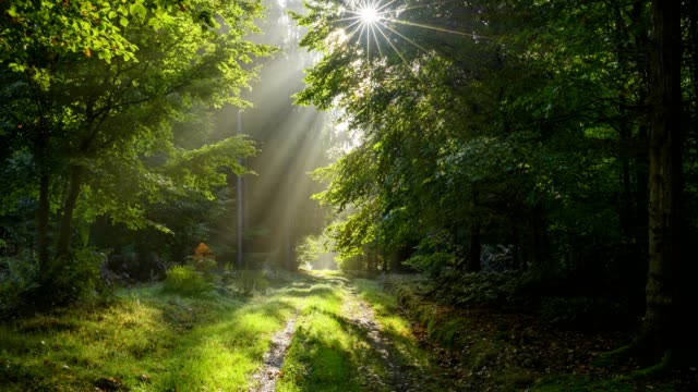 forest path in the morning with sun, vielbrunn, michelstadt, odenwald, hesse, germany - lush video stock e b–roll