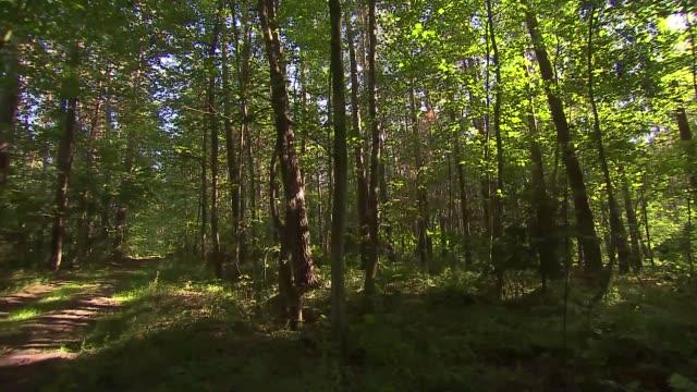 vidéos et rushes de forest path - brindille