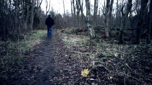 forest path - missing persons stock videos & royalty-free footage