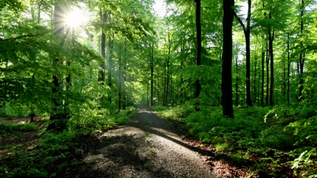 Forest path with sunrise, Spessart, Franconia, Bavaria, Germany