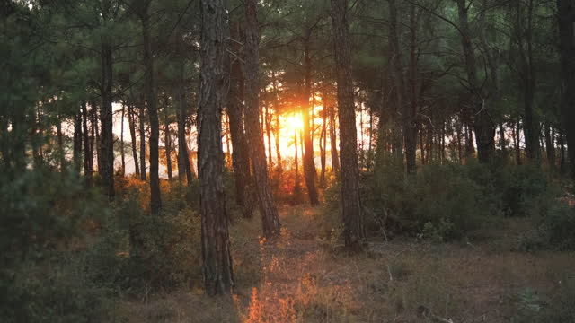 forest pine tree - dissolving stock videos & royalty-free footage