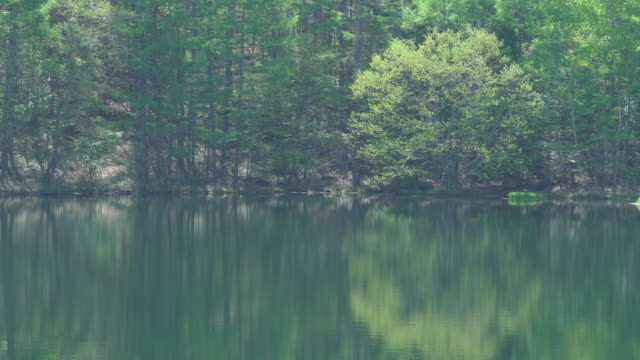 forest reflected in a beautiful pond on a sunny spring day - nagano prefecture stock videos and b-roll footage