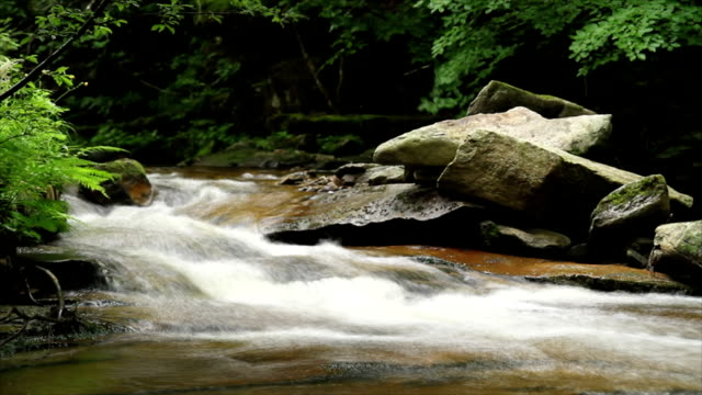 forest river - mgost stock videos and b-roll footage