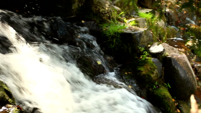 forest river waterfall + audio - rock face stock videos and b-roll footage