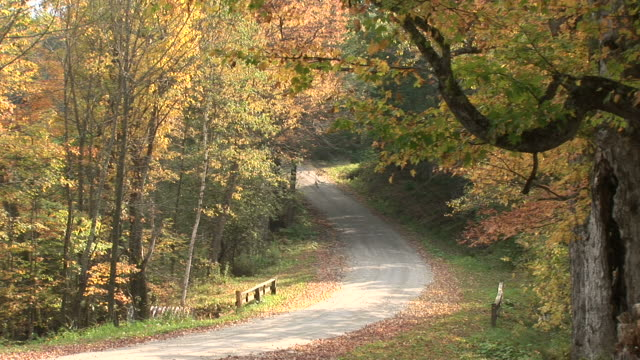 Forest road in Autumn season in Vermont United States