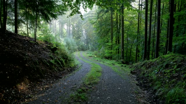 Forest road in the morning, Vielbrunn, Michelstadt, Odenwald, Hesse, Germany