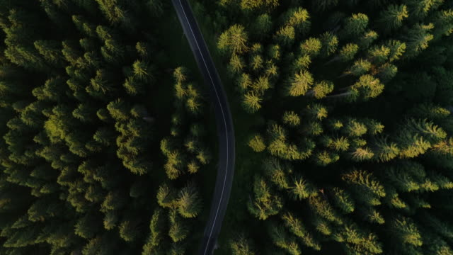 forest road trip from drone view - timber stock videos & royalty-free footage