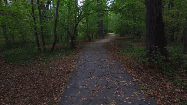 vidéos et rushes de route forestière - végétation verdoyante