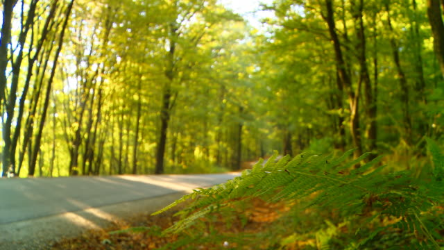 HD DOLLY: Forest Road