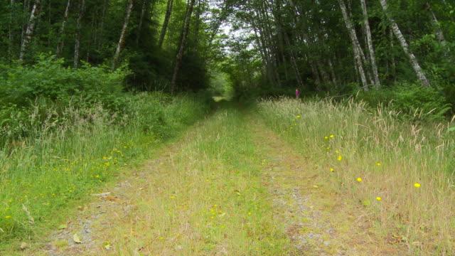 vídeos de stock, filmes e b-roll de forest road - olympic national park