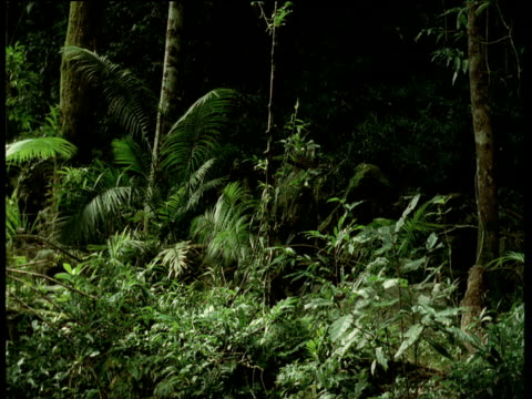 vidéos et rushes de forest scene, fern fronds move on their own as if someone is pushing past - invisible