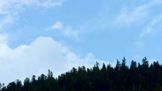 Forest silhouette and clouds timelapse Mt. Hood Spring Forest Oregon Cascade Mountains