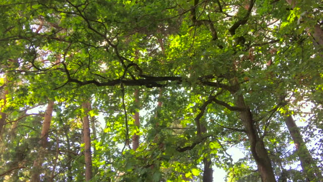 forest spinning point of view - spinning point of view stock videos & royalty-free footage