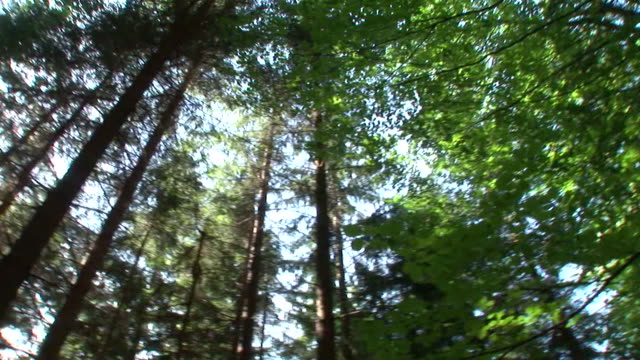 hd: forest spinning - treetop stock videos & royalty-free footage