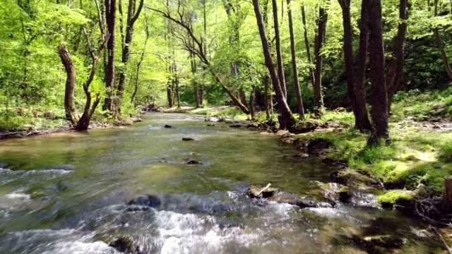 forest spring - named wilderness area stock videos & royalty-free footage