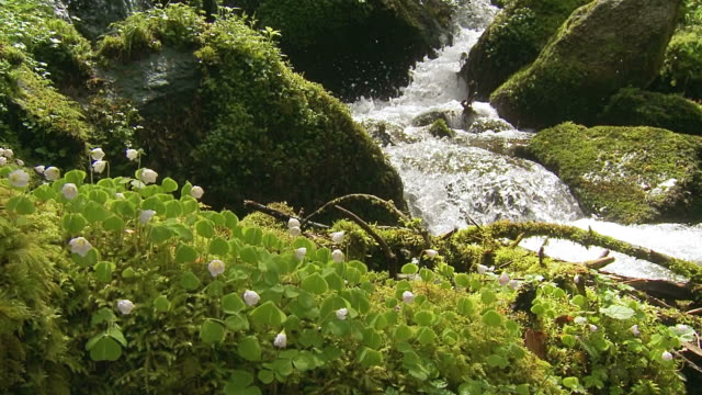 forest stream and flowers, dolly shot uphill - schwarzwald stock-videos und b-roll-filmmaterial