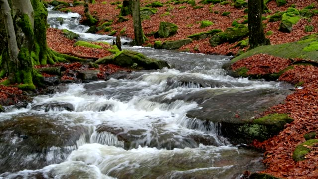 forest stream breitenbach, odenwald, bavaria, germany - stream body of water stock videos & royalty-free footage