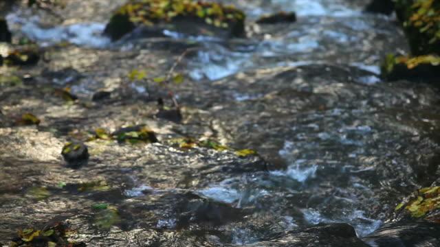 vídeos de stock, filmes e b-roll de hd fluxo da floresta no outono (panning à direita - floresta da bavária