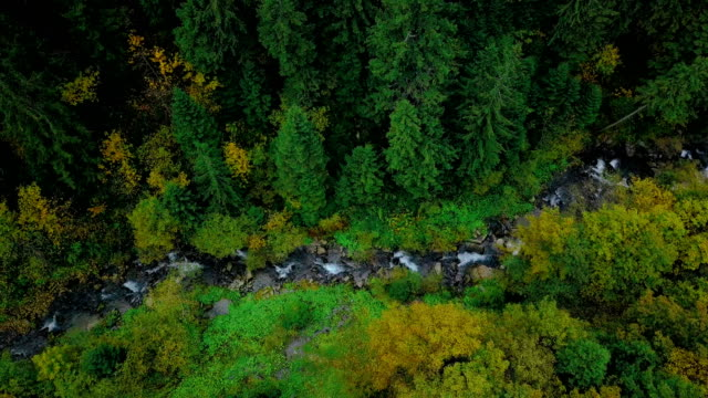 forest stream in ravine between pine trees. aerial view - stream stock videos & royalty-free footage