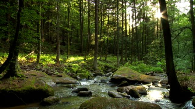vídeos de stock, filmes e b-roll de t e l fluxo da floresta à noite dom - floresta da bavária