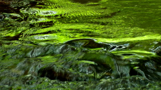 Forest Stream Mirroring Close-up (Loopable)