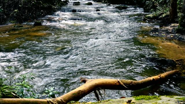 waldbach, der über moosige felsen läuft. kleiner flusswasserfall im regenwald mit natürlichem klang in thailand - klein stock-videos und b-roll-filmmaterial