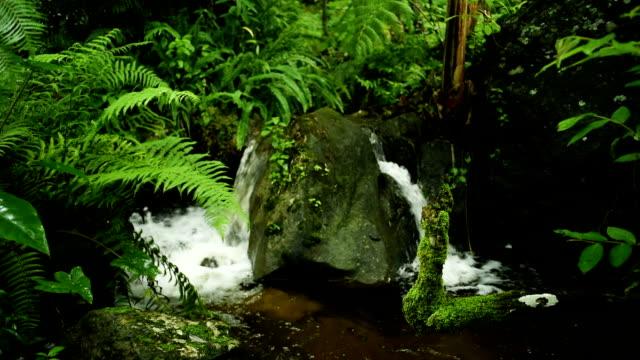 vidéos et rushes de ruisseau de la forêt de course de mossy rocks - source naturelle