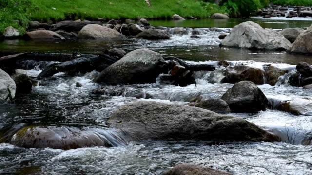 Forest stream kör över stenar