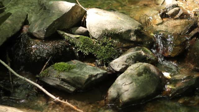 wald stream nahtlose loop 3 - zweig stock-videos und b-roll-filmmaterial