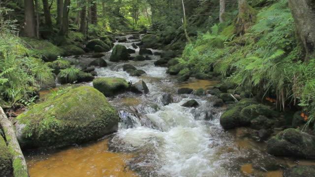 forest stream, summer - 30秒以上点の映像素材/bロール