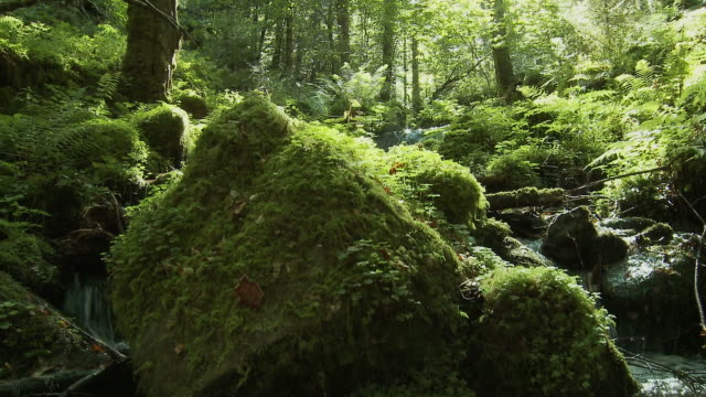 forest stream, summer - moss stock videos & royalty-free footage