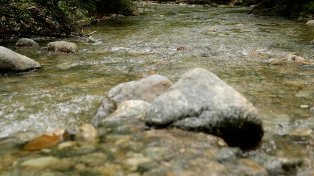 forest stream - named wilderness area stock videos & royalty-free footage