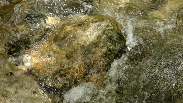 フォレストストリーム - 湧水点の映像素材/bロール