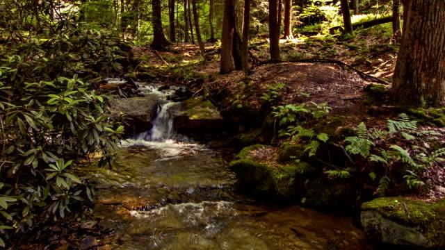 Een forest-stream