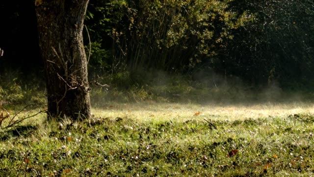 forest solljus. solljus lyser på gräset nära ett träd i en höst skog. - höstlöv bildbanksvideor och videomaterial från bakom kulisserna
