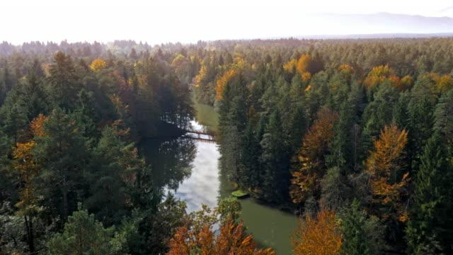 ANTENNE de forêt entourant un lac qui brille au soleil