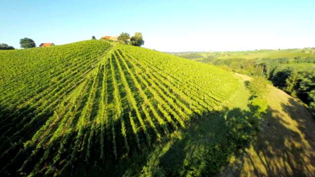 AERIAL Forest Surrounding The Vineyard