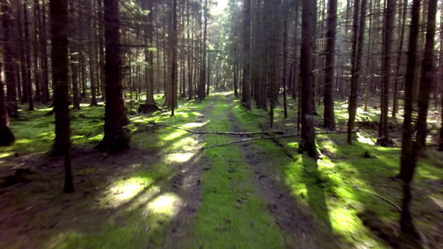 stockvideo's en b-roll-footage met forest track aerial flyover shot - footpath
