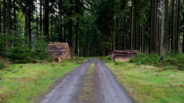 vídeos de stock e filmes b-roll de forest track in coniferous forest after rain, kirchzell, forest region odenwald, bavaria, germany, europe - coniferous