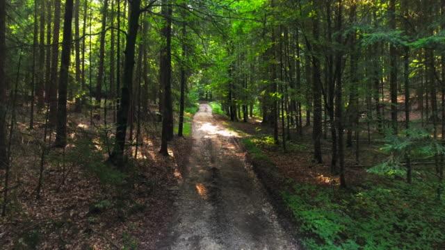 Forest Track Mid Aerial Flyover Shot